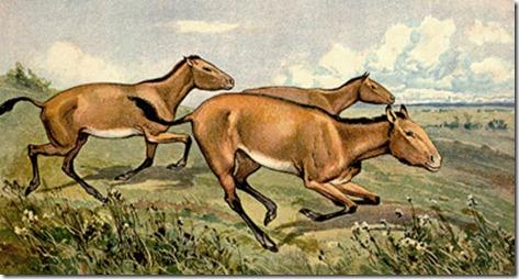 cavalos-antepassados