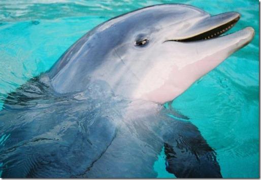 golfinho-fala