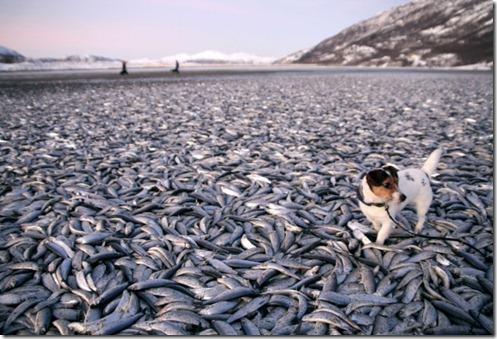 peixes-mortos