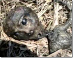 alien morto brasil thumb Material genético dos extraterrestres