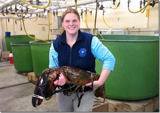 lagosta-gigante