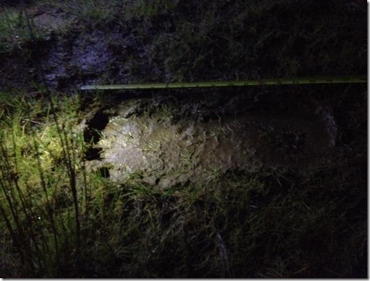 pegada pe grande thumb Mais de 120 pegadas de Pé Grande são encontradas no Oregon, EUA