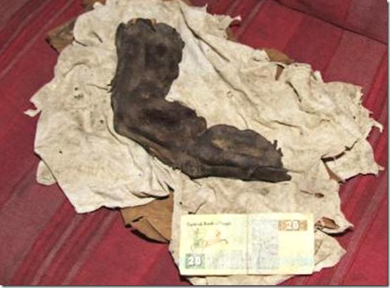 dedo gigante3 thumb Dedo gigante de 38 cm é encontrado no Egito