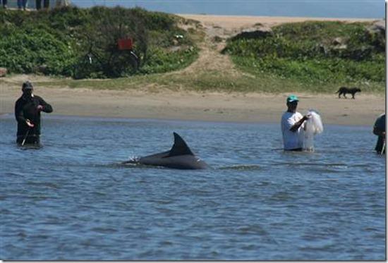 pescadores-golfinho