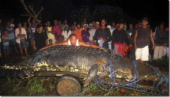 crocodilo-gigante