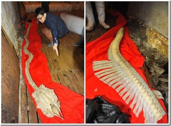 esqueleto dragao 2 thumb Esqueleto de dragão aparece em mar da China