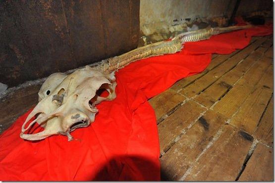 esqueleto dragao thumb Esqueleto de dragão aparece em mar da China