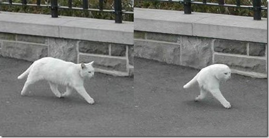 meio-gato