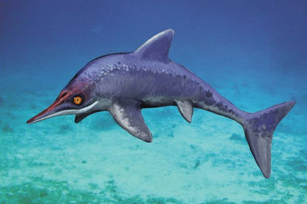 new-malawania-sea-monster_67451_600x450