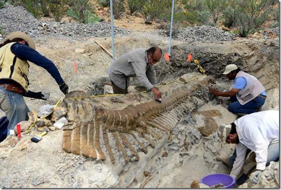 cauda dinossauro 2 thumb Cauda de dinossauro encontrada no México está em perfeitas condições