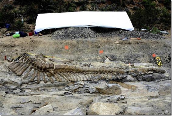 cauda dinossauro 3 thumb Cauda de dinossauro encontrada no México está em perfeitas condições
