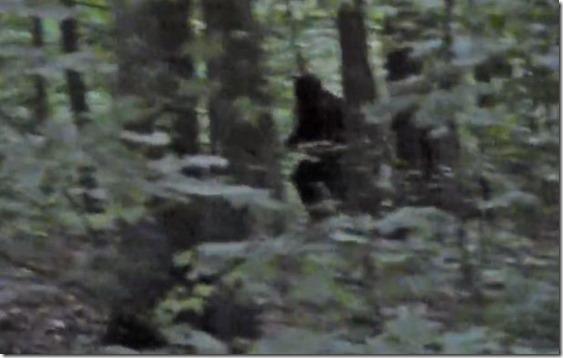 pe grande floresta thumb Homem persegue Pé Grande em floresta