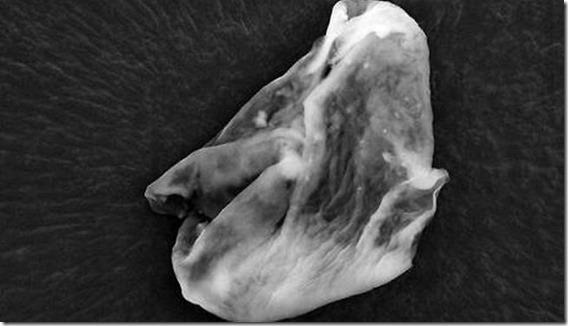 alien 2 pollice Gli scienziati hanno trovato prove di vita aliena nella stratosfera