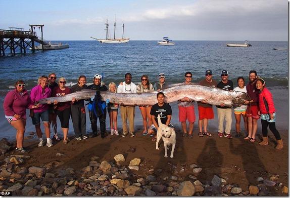 peixe gigante thumb Peixe gigante de 5 metros encontrado na costa da Califórnia