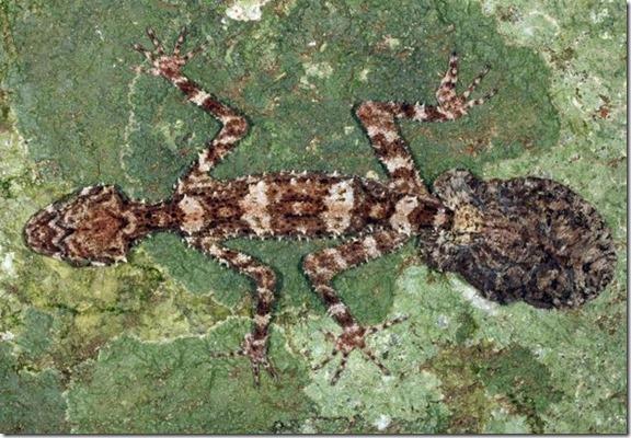 vertebrados perdidos thumb Mundo perdido descoberto na Austrália
