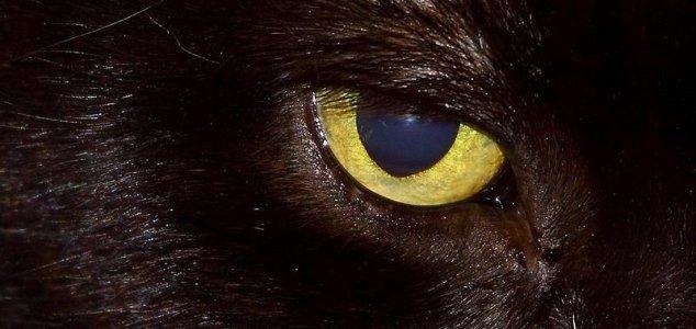 gato diabolico Gato diabólico aterroriza moradores da Inglaterra