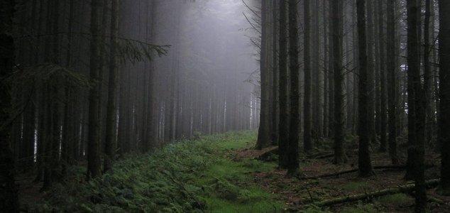 floresta assombrada Triângulo das Bermudas em floresta da Transilvânia