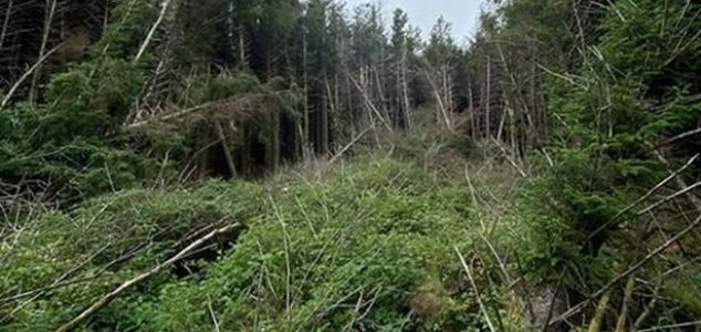 Homem descobre 'local de queda de OVNIs' em floresta da Inglaterra