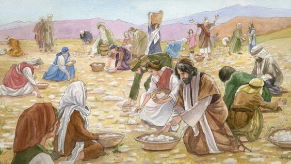 O que era o Maná, o alimento misterioso que 'Deus' enviou do céu?